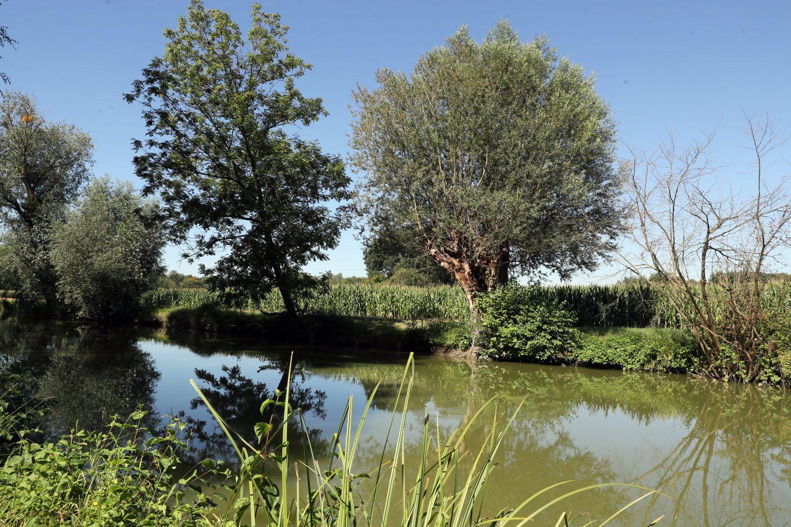 À Blaesheim, le long de l'étang de pêche du Hanfbach, les saules têtards argentés, variétés les plus communes, font partie du paysage.   Photo L'Alsace /Thierry Gachon (Cliquer pour agrandir)