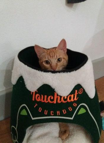 Le lit volcan de mon chat  Me-You - Banggood -