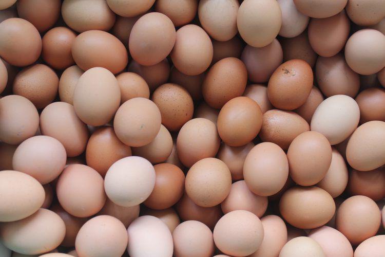 Centrafrique les ufs import s de l europe en for Conservation d un oeuf