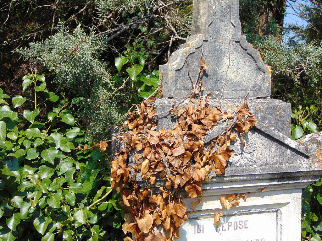 Le ptit cimetière abandonné - St Vaize (17) 13 avril 2019 :