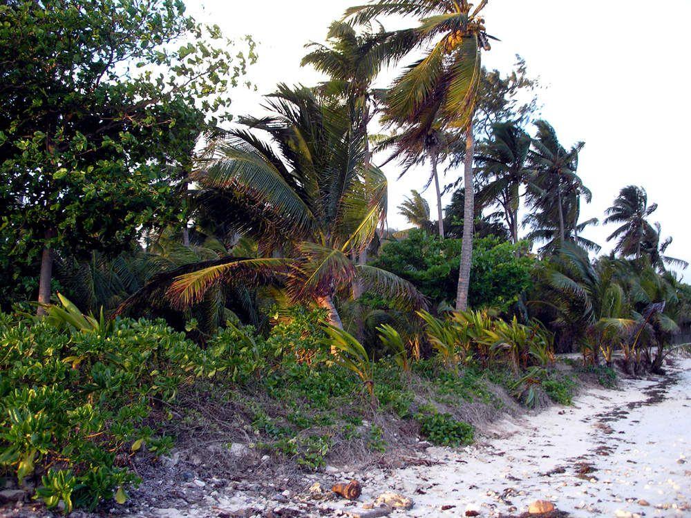 Palmiers à l'intérieur de l'ile et sur la plage