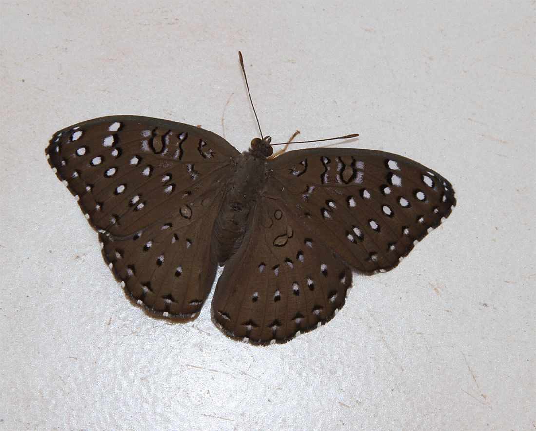 Macro - Insectes