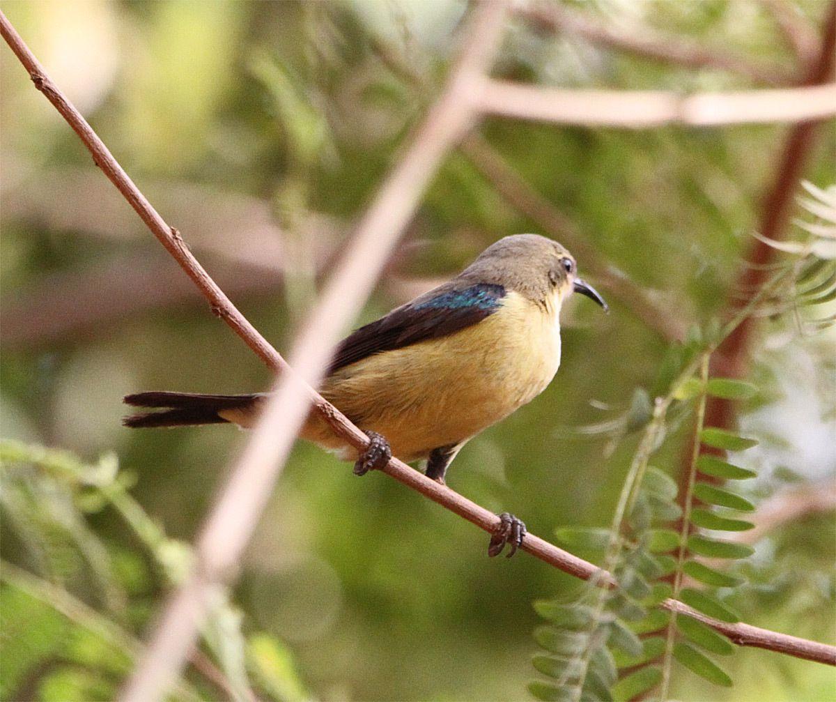 Les oiseaux d'Afrique - Partie 1