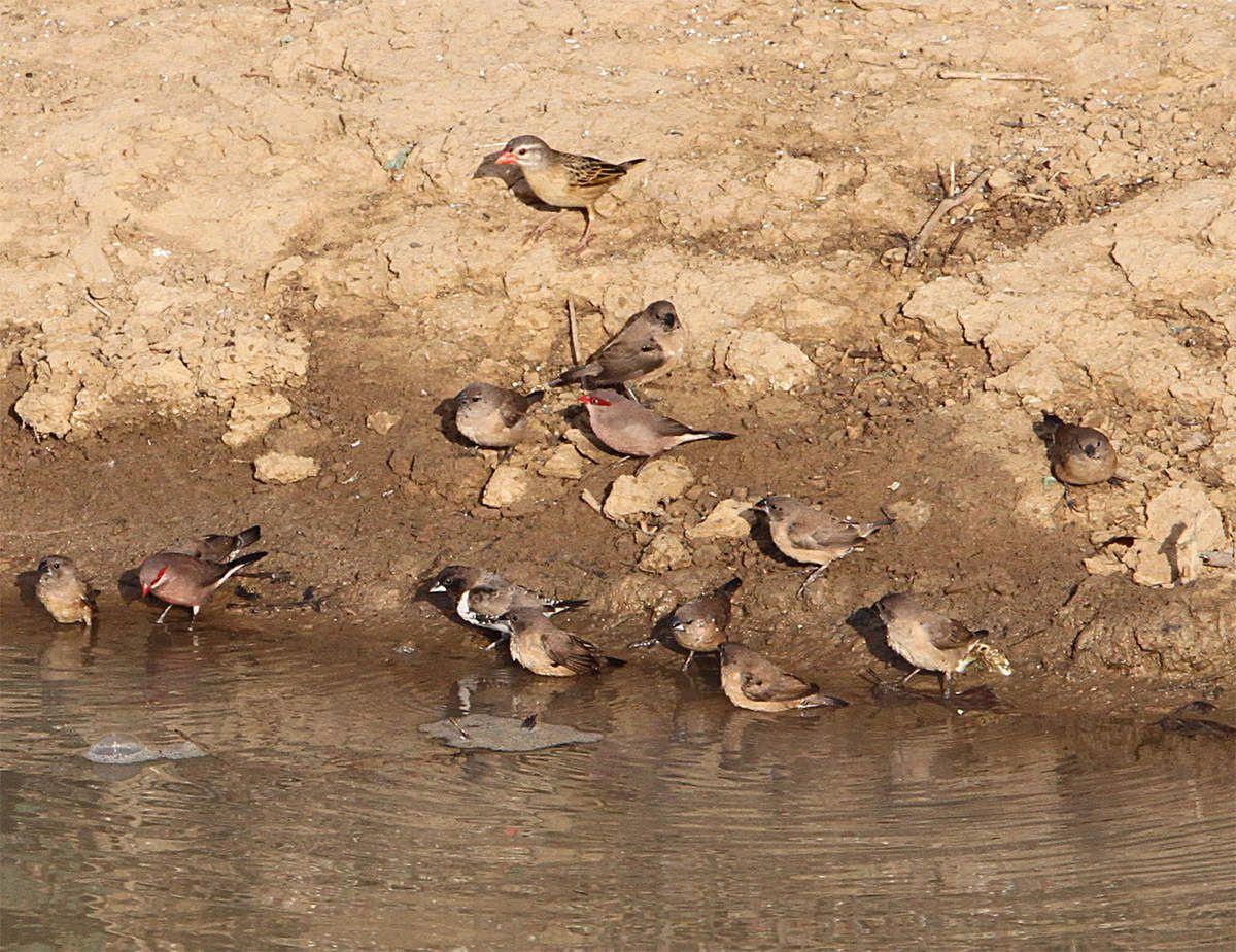 Les oiseaux d'Afrique (2)