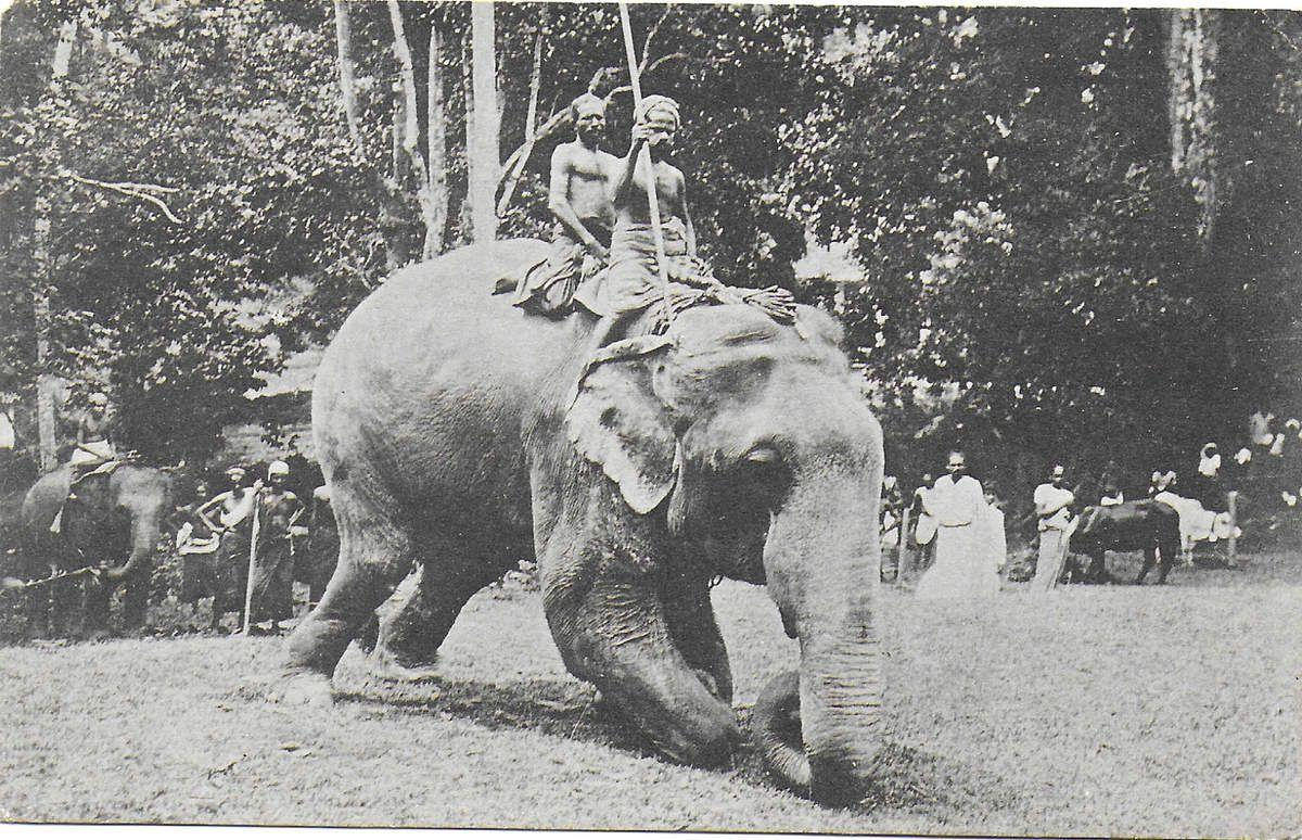 Colombo - éléphant