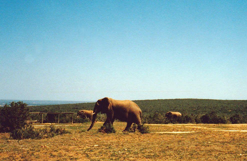 Kruger 1989