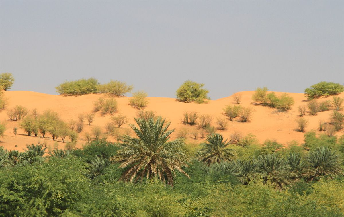 Kamour - Mauritanie