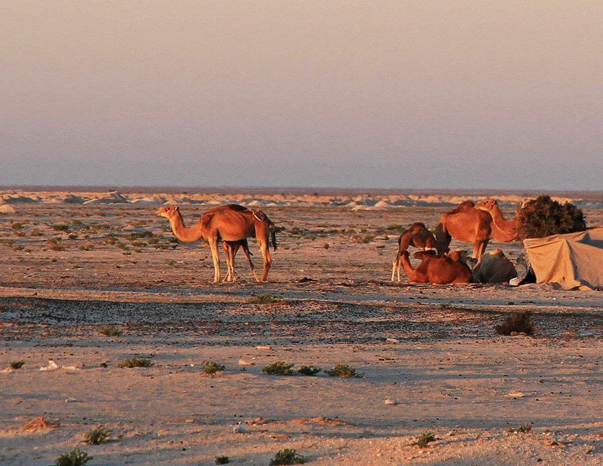 Un matin de janvier sur la route d'Akjout
