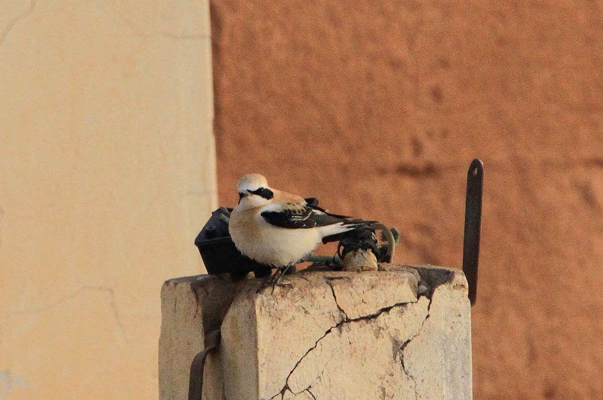 Kiffa - Mauritanie - 2018