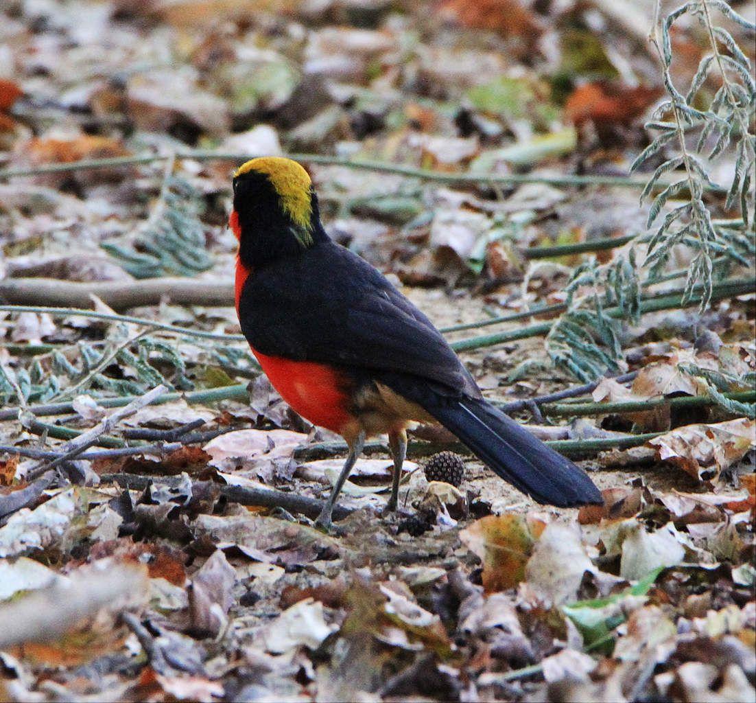 Les oiseaux d'afrique (3)