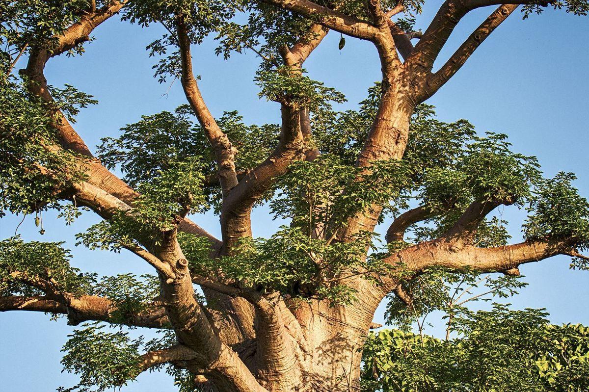 Baobab -Route du Niger - Burkina -2018