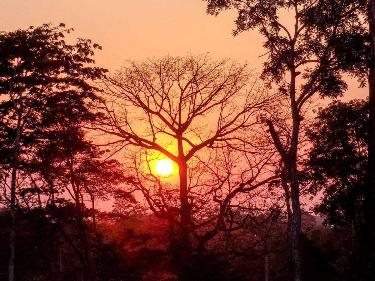 Coucher de soleil sur la forêt de Danané (Côte d'Ivoire)