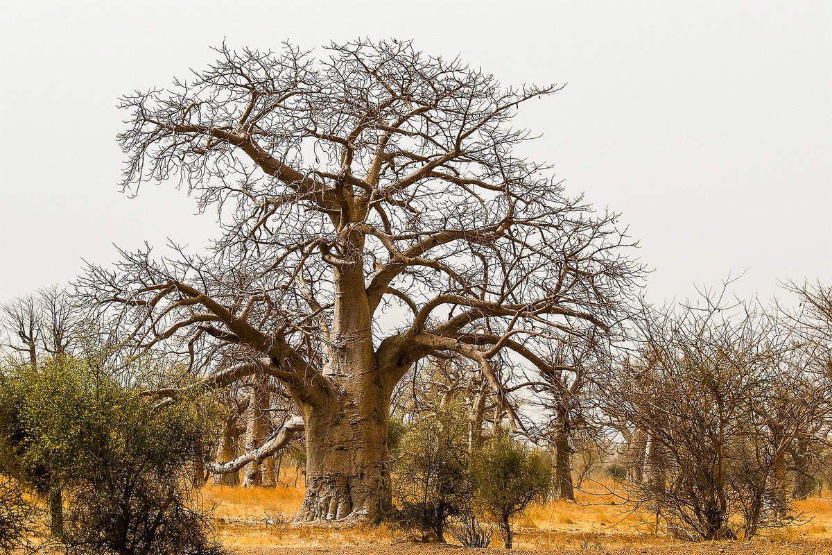 Paysages typiques entre Goudiri et Kidira (Frontière Malienne)