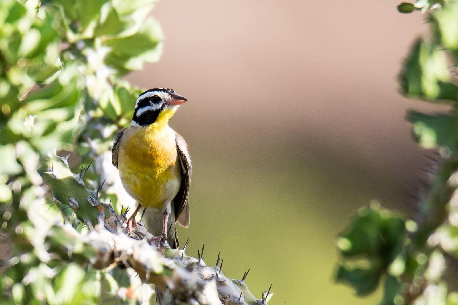Les oiseaux d'Afrique (5)