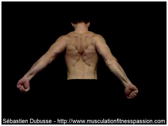 Quelques conseils pour renforcer et entretenir votre musculature, pour Sébastien Dubusse, blog Musculation/Fitness Passion