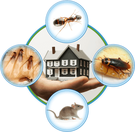 Know the Important facts of pest control service - Green