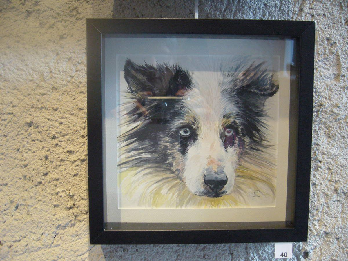 Border Collie, aquarelle