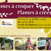 Plantes à croquer plantes à créer: ateliers d'été