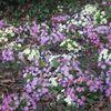 Fleurettes... sans paroles !