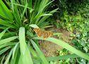 Papillon; le défi de la plume d'Evy