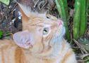 CHARLY - magnifique chaton - né le 25/04/2017 - adopté