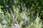 Senteur de Provence.