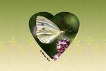 Papillon atout coeur
