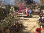 Au jardin partagé samedi …