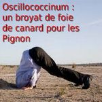 Oscillococcinum : un broyat de foie de canard pour les Pignon...Et les pigeons