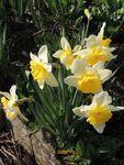 C'est le printemps !....