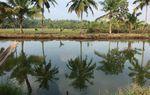 Kerala, yoga et marche : un voyage d'immersion - 10/24 février 2018