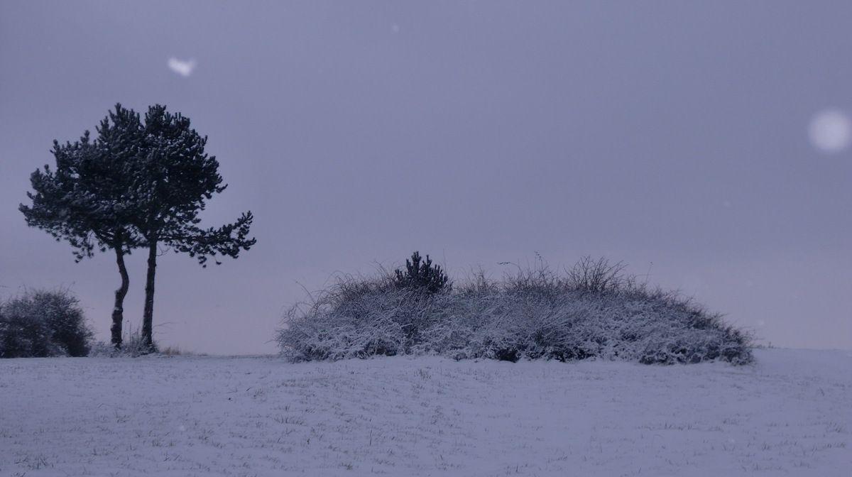 Le sommet du Goeftberg (397 m) dans le froid et la grisaille.