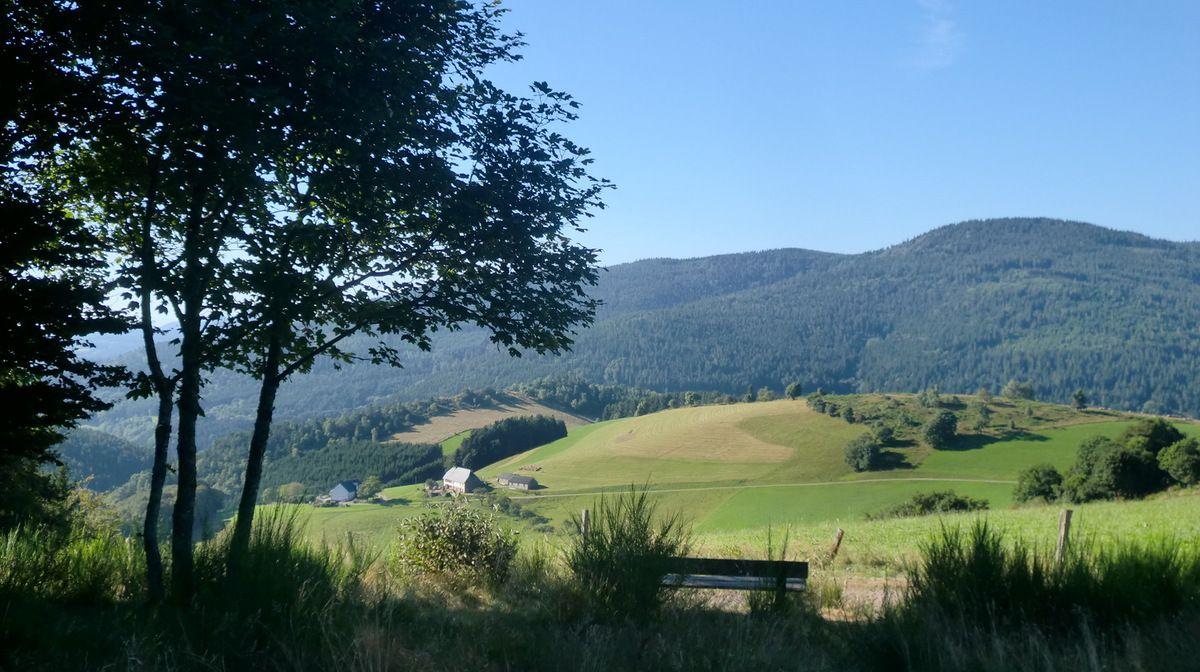 Peu après le départ du Col des Bagenelles (905 m).