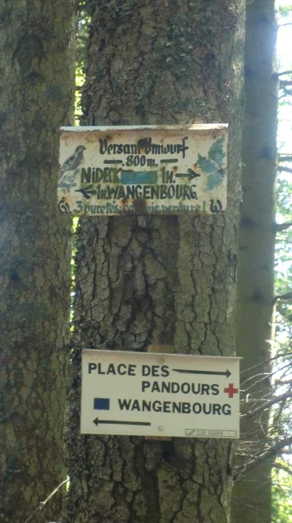 Encore un beau balisage. Les 3 puretés de la Nature : eau, vie et verdure. Altitude : 800 m.