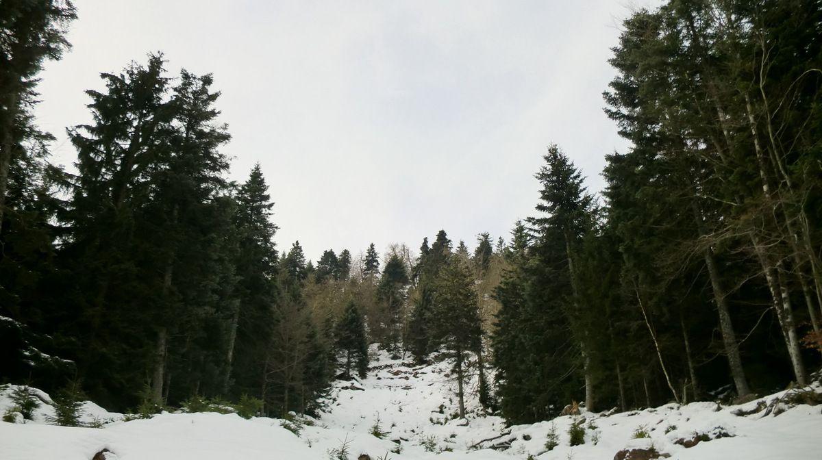 Vue depuis la base du couloir, vers la crête du Schneeberg..