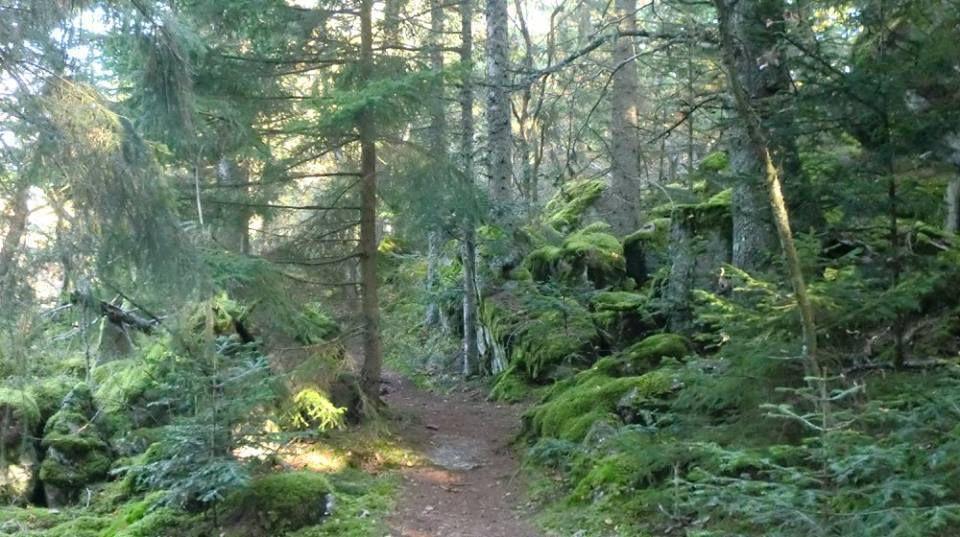 En suivant le sentier balisé Disque Rouge Point Blanc, nous pénétrons dans la mystérieuse forêt du massif du Taennchel..