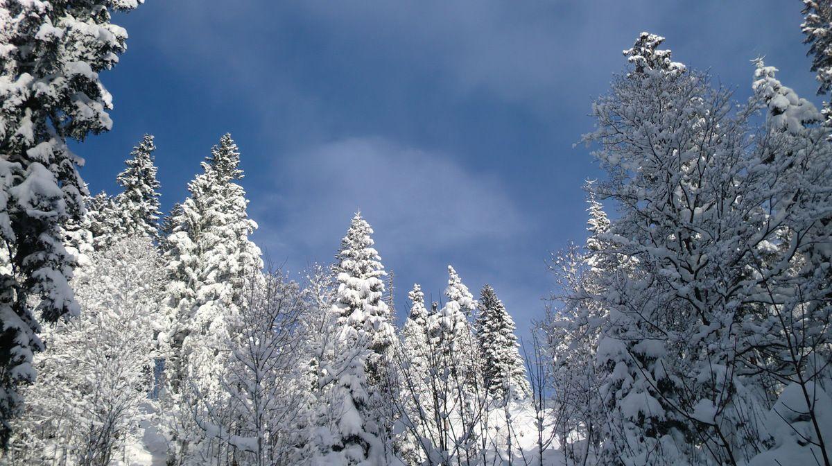 un magnifique ciel bleu se dessine au dessus des cimes des arbres.