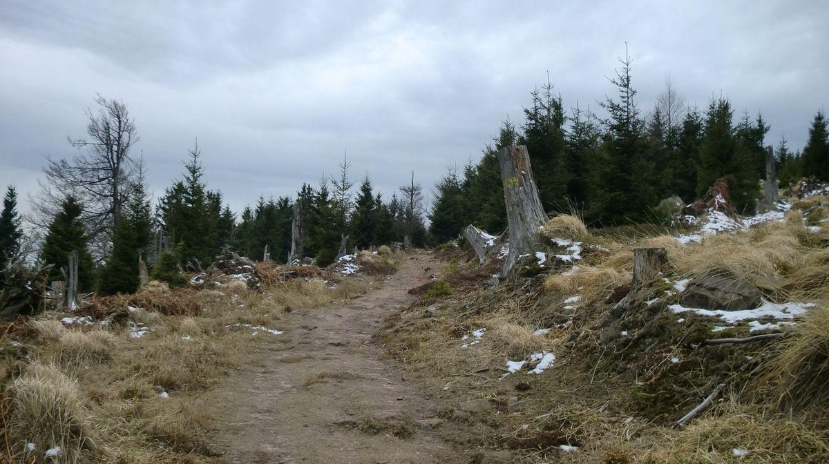 Sur le sentier Disque Rouge vers le Rocher de Mutzig.
