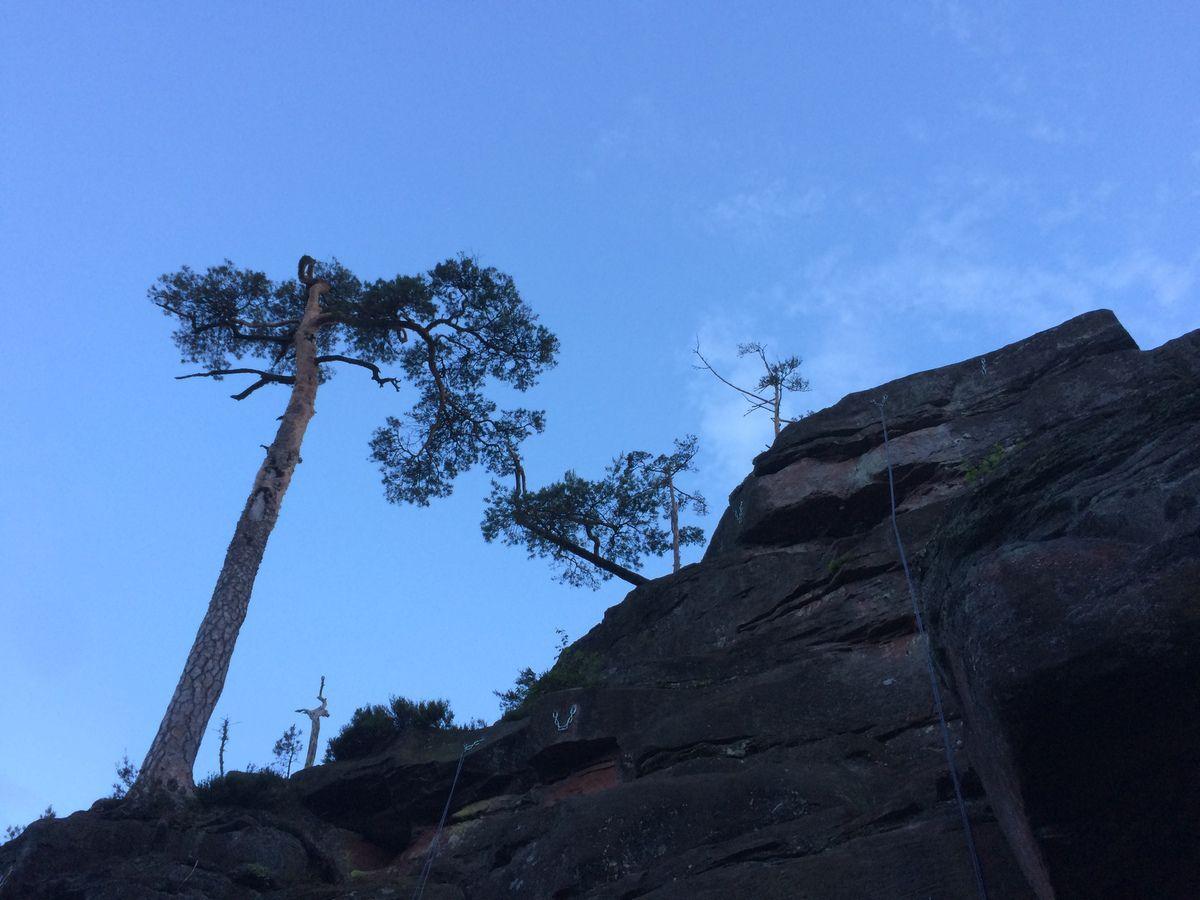 Au dessus de lui, veille le pin du Château.