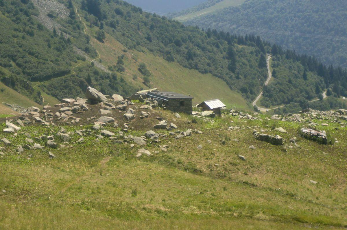 A hauteur de la bergerie du Queigey, pas de troupeau à proximité, mais au vu des nombreuses crottes juchant le sol, il devait y avoir passé la nuit.