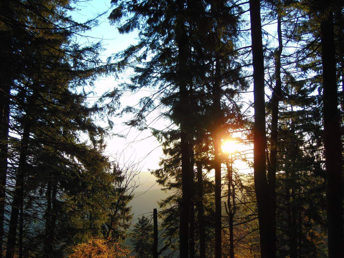 Et les premiers rayons du soleil transpercent les arbres.