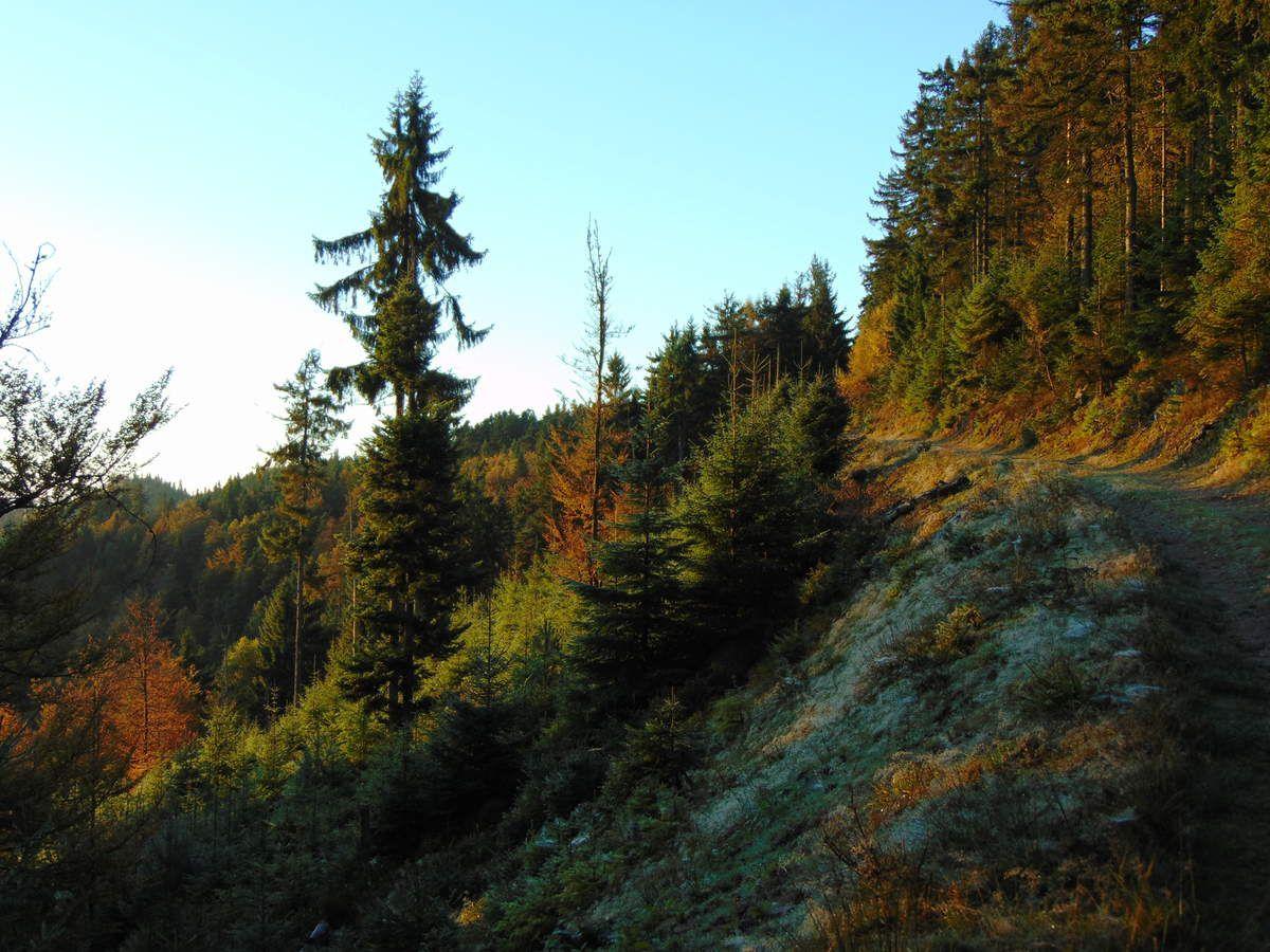 Octobre - Automne au Schneeberg - Vosges