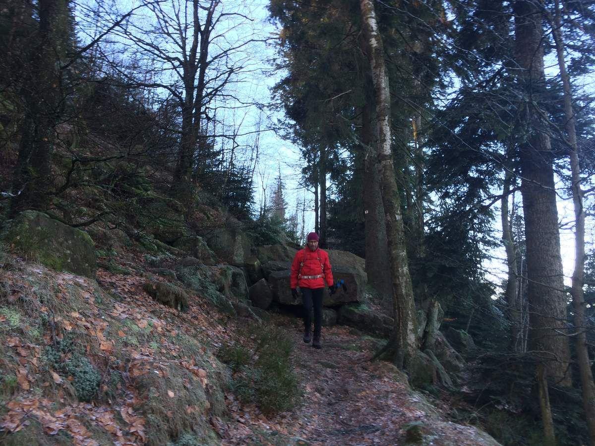 Direction le Col entre les Deux Donon, par le sentier balisé Rectangle Rouge ( balisage qui ne figure pas sur la carte
