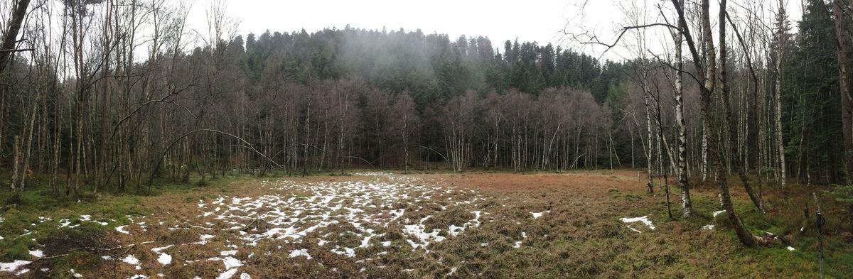 La tourbière de Grafen Weiher, vestige d'un ancien lac glaciaire...
