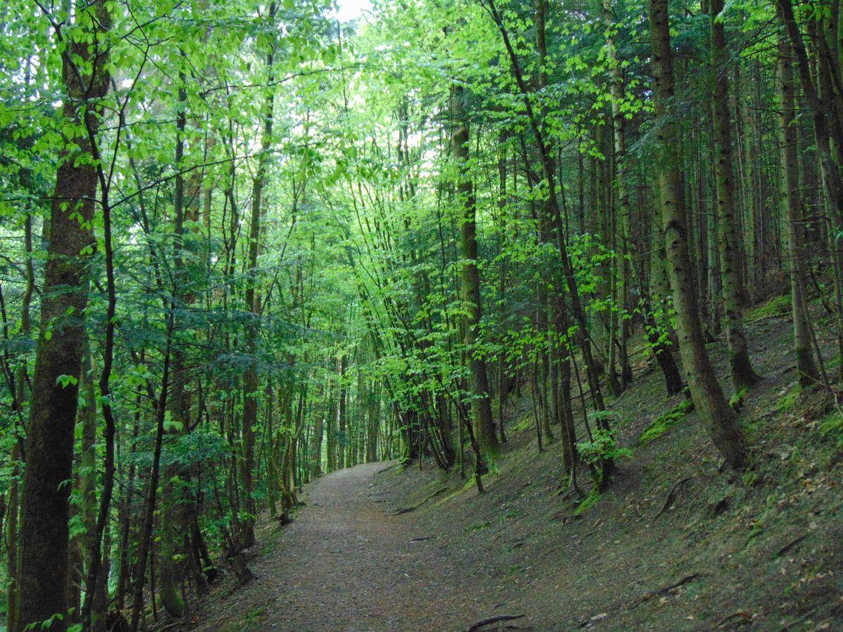 Au départ du parking, de l'auberge de la cascade, dans la vallée de la Hasel, le sentier (GR53) s'élève paisiblement en direction de la cascade.