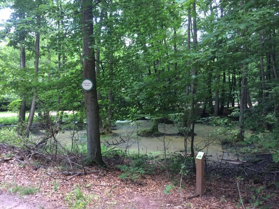 A proximité de la route forestière du Breitschloss, la zone marécageuse du Lach