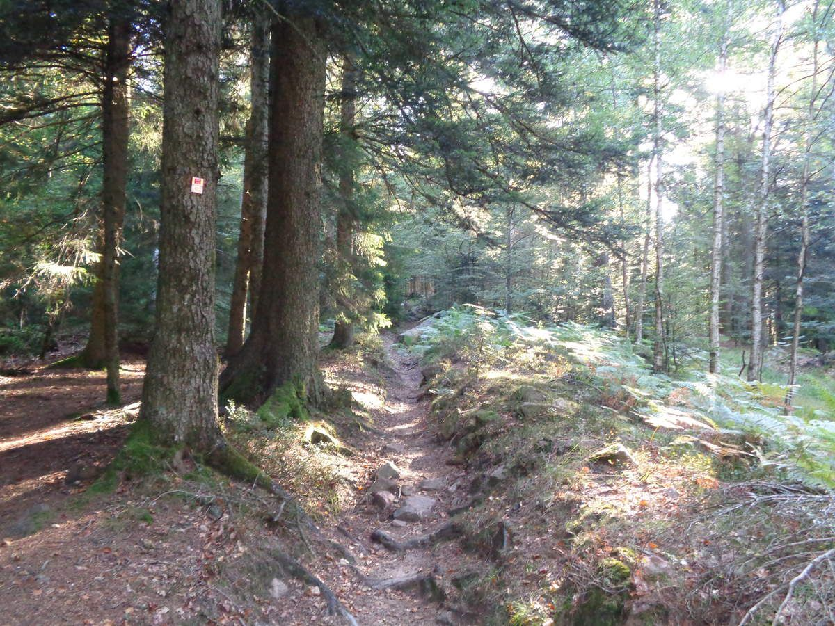 Et c'est la montée vers le Rocher, avant de sortir du sous-bois et de découvrir,