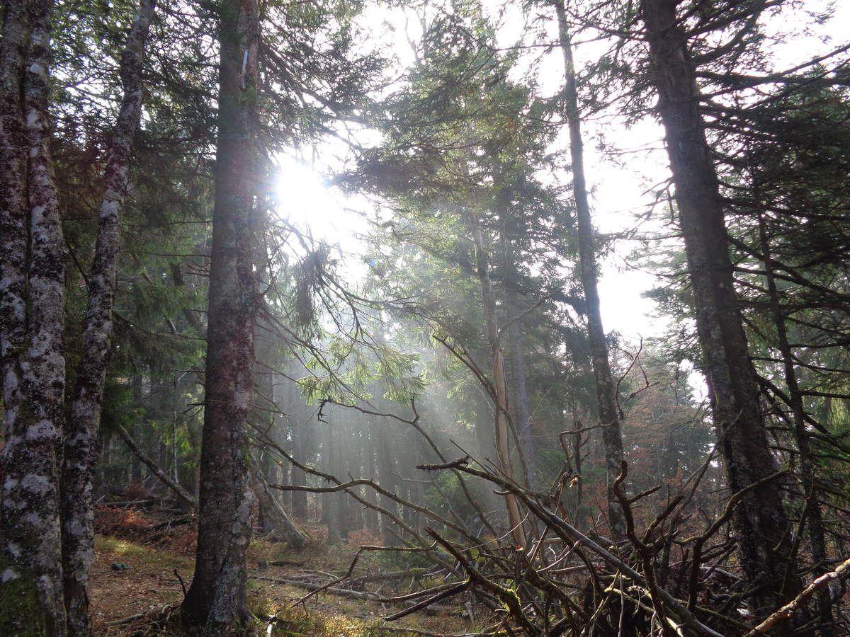 Après le col, nous pénétrons dans la zone naturelle du Klintzkopf (Accès réglementé).