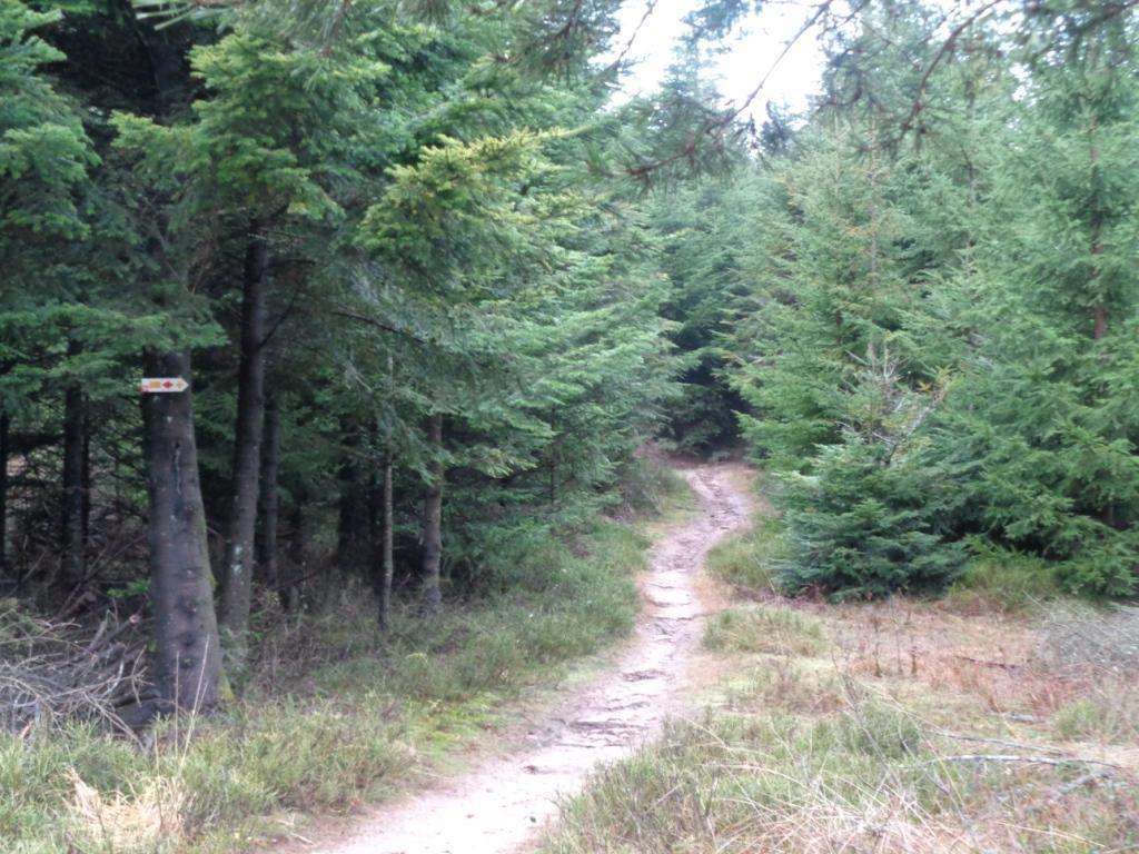 Cette première clairière, porte une borne frontière, je passe de l'Alsace en Lorraine.