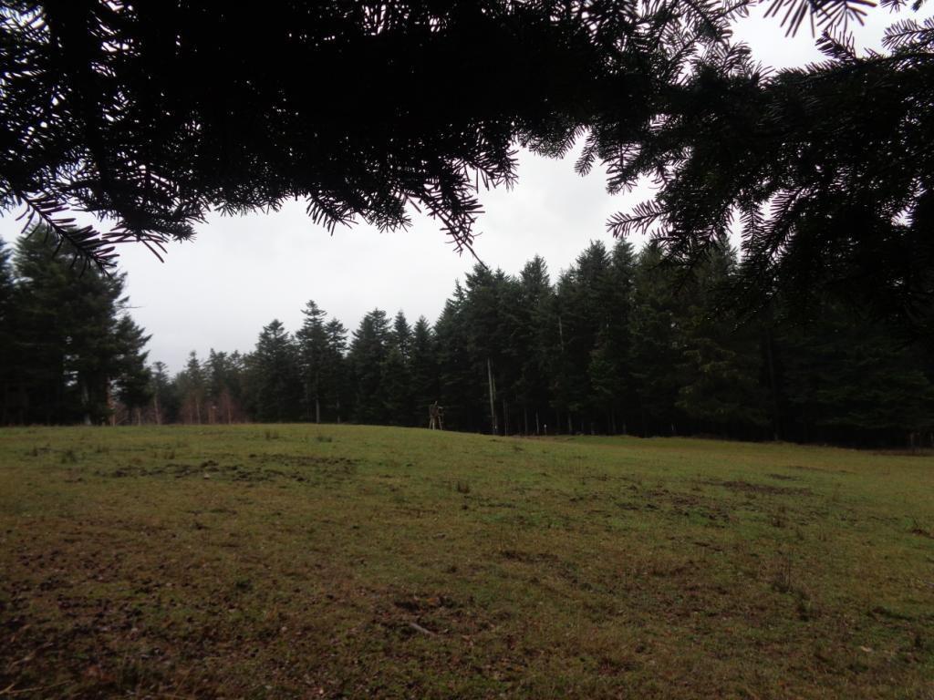 Sur le retour, chemin forestier du Blottkopf, un agrainnoir au milieu d'une vaste clairière témoigne encore de la présence de gibier.